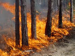 California Wildfires Global Warming by Global Warming Causing High Temperatures And Wildfires Guardian