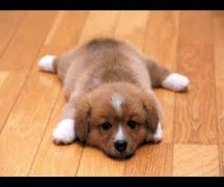dogs sliding on wood floors from