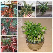 popular ornamental trees shrubs buy cheap ornamental trees shrubs