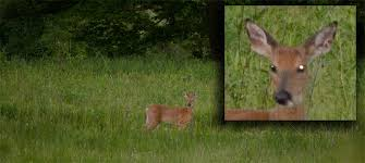 Reflective Deer Blind What Deer See Whitetail Vs Hunter Outdoor Experiment