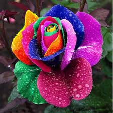 favorable 100pcs rainbow seed colorful flower home