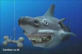 film kartun ikan hiu gambar kartun hiu lucu terbaru top gambar