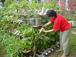 backyard vegetable garden philippines outdoor furniture design