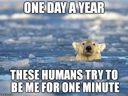 Polar Bear Meme - polar bear swim memes imgflip