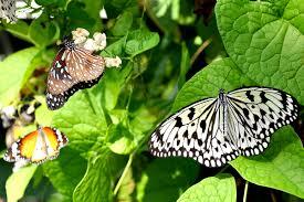 penang butterfly farm batu ferringhi attractions