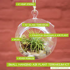 air plant terrarium globe kit small modern plants