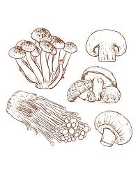 80 off sale hand drawn collection of mushroom sketch hand drawn