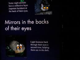 Zoo Lights Woodland Park Silenced Majority Portal Sad Final Day For Nocturnal House