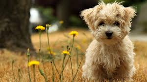 wonderful cute animal desktop backgrounds on wallpapers image with