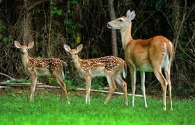 the of new lawn fawns environment health