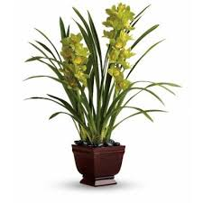 Flowers To Go Orchids Cymbidium Orchids Dendrobium Orchids Flowers To Go