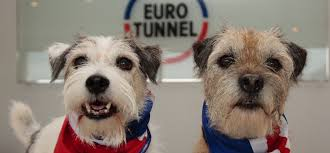 travelling with your pet eurotunnel le shuttle