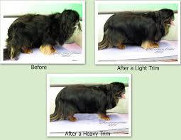 Dog Grooming Styles Haircuts Pet Grooming The Good The Bad U0026 The Furry Grooming A Pekingese