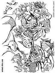 free printable sea life coloring pages animal coloring page under the sea print size jack the lizared