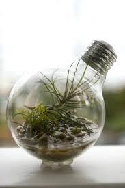 grow light bulbs lowes plant in light bulb fluorescent grow light bulbs lowes
