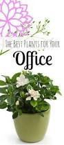 Desk Plant 25 Best Best Office Plants Ideas On Pinterest Best Plants For