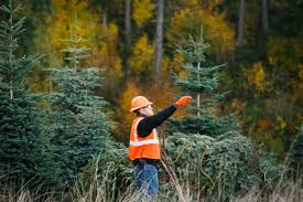 Pacific Northwest Christmas Tree Association - ksdk com christmas trees will be more expensive this year amid