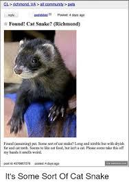 Ferret Meme - cat snake ferret meme mne vse pohuj