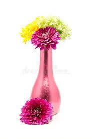 dalia in vaso fiori della dalia in vaso fotografia stock immagine di fiori