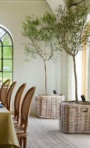25 unique sweet olive tree ideas on arbequina olive