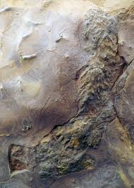 paleontology u2013 mostly mammoths mummies and museums
