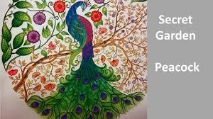 secret garden coloring book chile peacock secret garden by johanna basford speed coloring