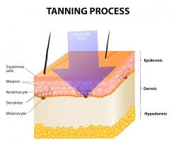 Do Tanning Beds Cause Cancer Skin Cancer Selfie Highlights Danger Of Tanning Beds Longevity Live