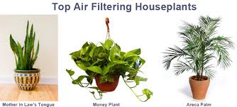 Plants For The Bedroom by Grow Your Own Fresh Air U2013 Simplydixon