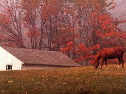 free fall wallpaper for computer horses in autumn desktop wallpaper wallpapersafari