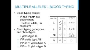punnett square practice problems multiple alleles  youtube with  from youtubecom