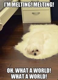 Funny Animal Memes - image funny animal memes jpg club penguin pookie wiki fandom