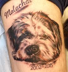 terrier tattoo the exotic skin shop home facebook