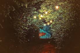 free photo trees leaves string lights free image on