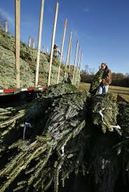 christmas tree supply expected to be tighter this year could