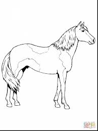 terrific paso fino horse coloring page with coloring pages of