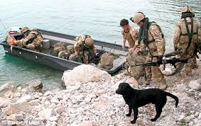 afghan hound rescue england afghan hound is saved from the frontline by public campaign after