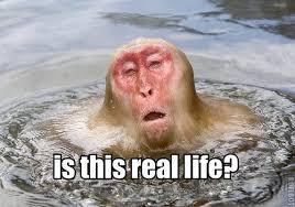Melting Meme - the melting monkey meme bodybuilding com forums