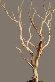 branch centerpieces help weddingbee