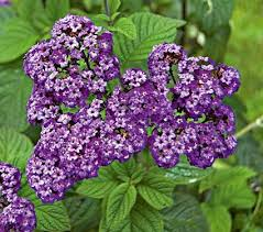 Fragrant Container Plants - 2494 best container gardening images on pinterest potted plants