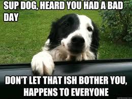 Cool Dog Meme - cool dog memes quickmeme