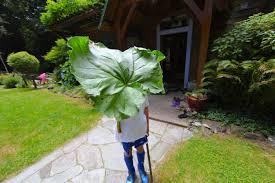 5 uses for rhubarb trash backwards blog