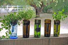 hydroponic garden in wine bottle indoor herb garden wine