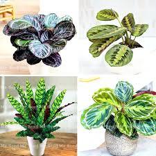 Best Flowers For Office Desk Desk White Plant Best Small Plant For Office Desk Lucky