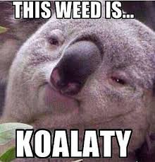 Weed Memes - may roundup 21 hilarious weed memes stoner motivation pinterest