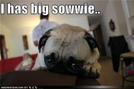 Sad Pug Meme - lol dogs sharenator