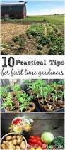 how to start a backyard vegetable garden hometalk gardening
