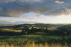 Valley Oregon Pinot Noir Grape Vineyard Of Youngberg Hill Vineyards Oregon