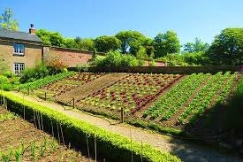 amazing walled garden with vegetable beds on an angle picture