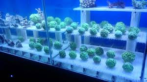 best lighting for corals 1 2 3 easy corals to select for your reef youtube