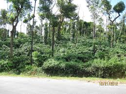 Plant Diseases Wikipedia - no evidence climate change boosts coffee plant disease